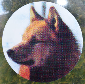 Finnish Spitz head car window sticker  –   £2.00