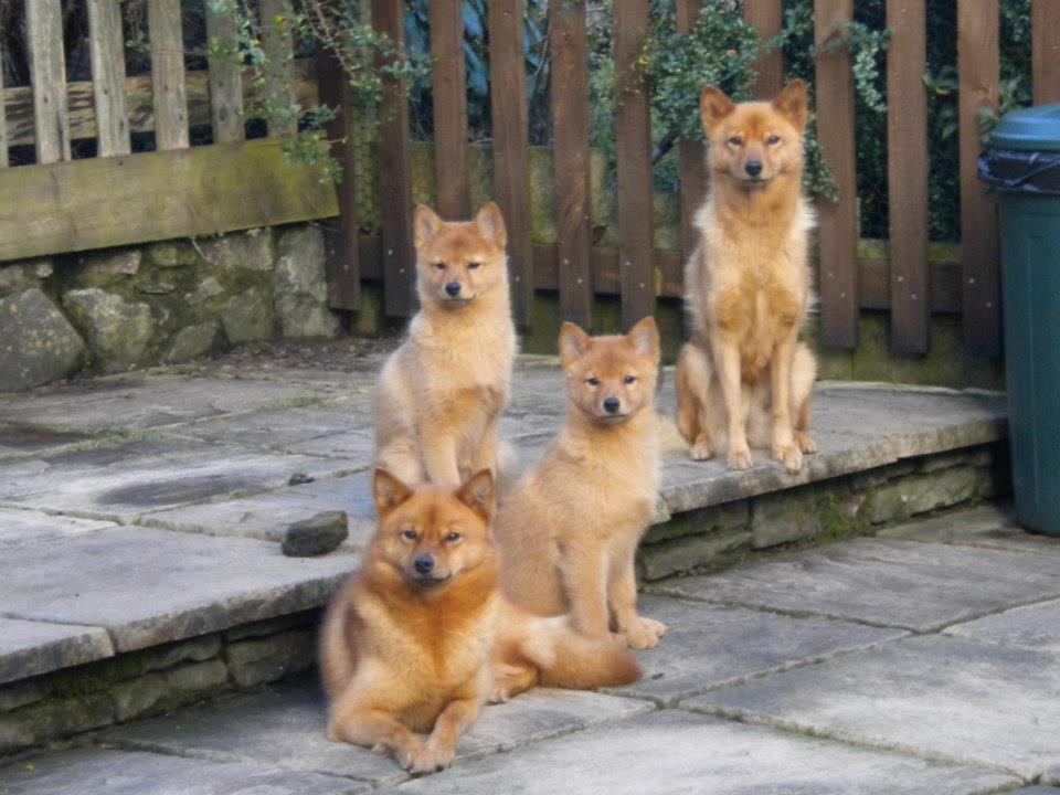 sukfamily